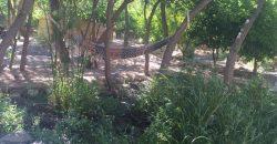 Paihuano 6.920 mts con casa y orilla de río